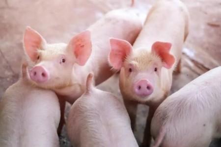 快速育肥猪的方法