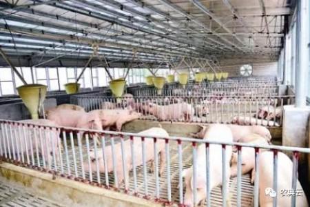 春天来了,猪场饲养管理需要注意什么?