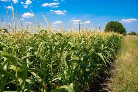 玉米豆粕价格在高位盘整,下游饲料价格上涨