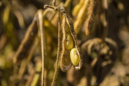 11个国家已经停止出口大豆。中国的大豆够吗?