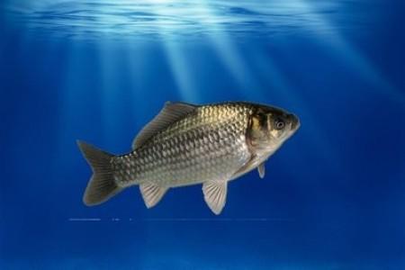 海南首家罗非鱼养殖收益保险落地