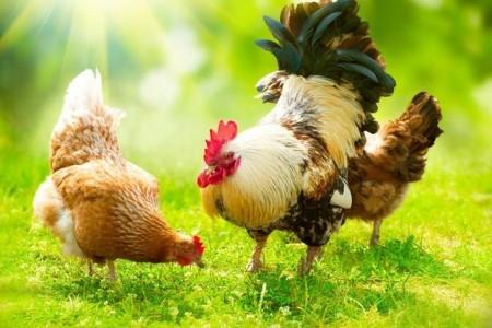 鸡肉价格止跌回升。不要期望太高。五一是分水岭!