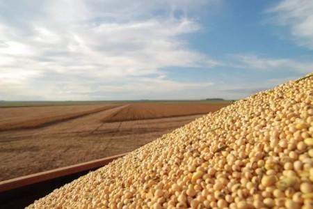 大豆出口已被11个国家暂停,大豆收购价格一直在上涨。中国的大豆够吗?