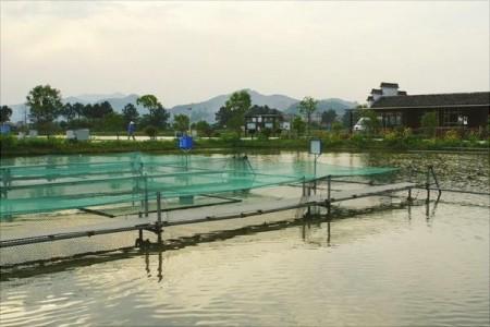 池塘养殖有哪些方法?池塘为什么缺氧?