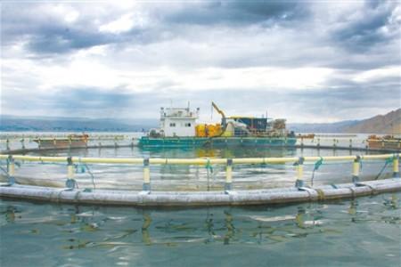 三文鱼鳟鱼产业:扎根青海大放异彩