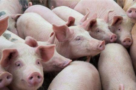 国家鼓励种田的政策太好了,巨头都扩张了!为什么中小型养猪户还是那么辛苦?