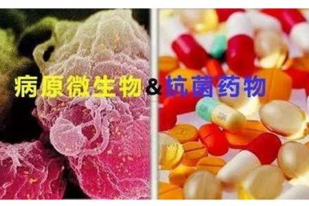"""如何理解""""杀菌药""""和""""抑菌药""""在临床高效药物治疗中的意义?"""