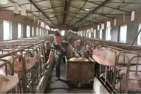 新发现!养猪场在驱虫,每个月都开车。为什么每年都不干净?