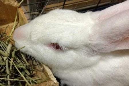 幼兔断奶需要注意什么?幼兔断奶时间和方法