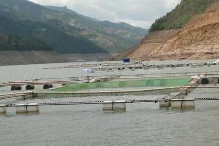 农村种田为什么要翻池塘?农村养鱼避免翻塘的措施