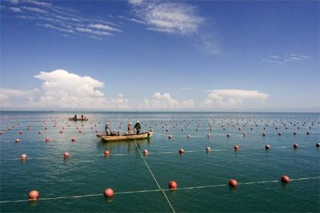 天津市财政支持恢复渔业生产1500多万元